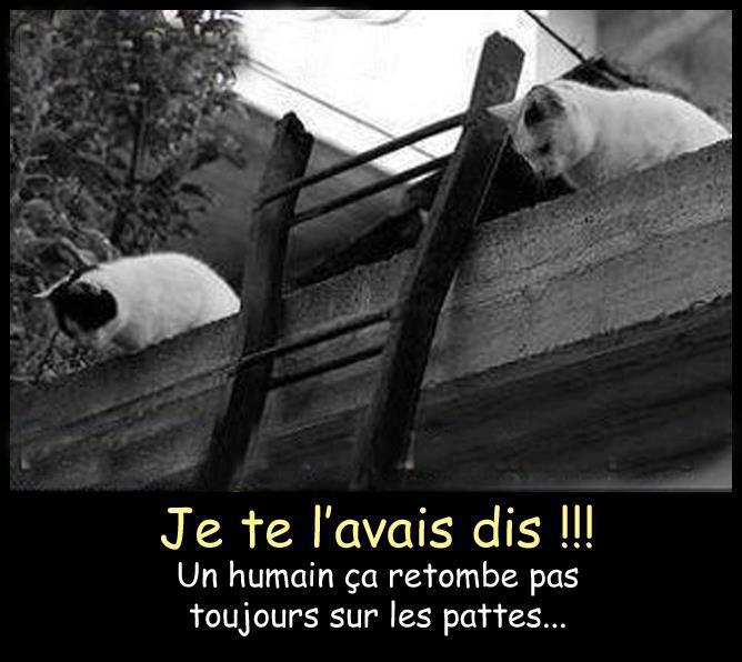 humour-chat-2.jpg