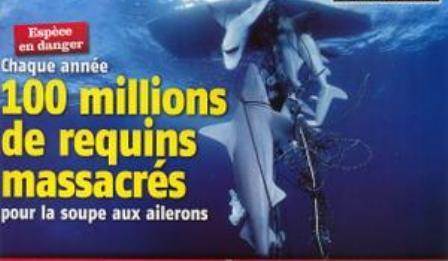 requins.jpg
